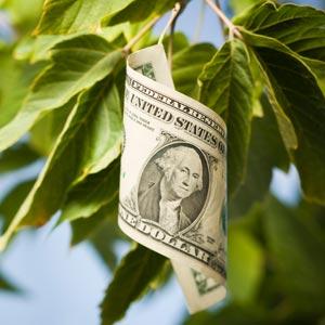 Dinheiro em Árvore? Nem no Vale do Silício (1/2)